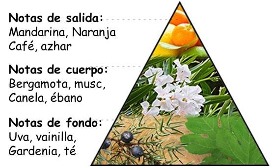 ¿Cómo elegir los mejores aromas para tu marca?